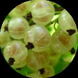 Плодово-ягодные деревья и кустарники